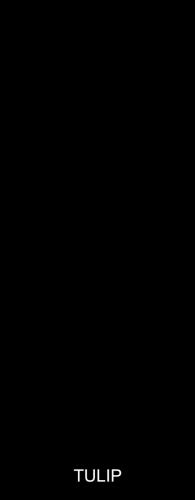 Tulip-800x2050